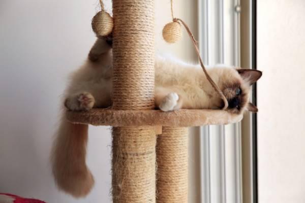 zone à griffer arbre à chat